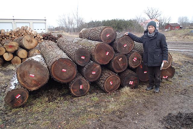 ブラックウオールナット買付け原木